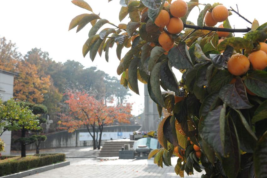 autumn41.jpg